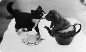 тукан, клички собак, клички кошек